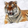 la tigre: arti marziali cinesi