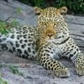 Arti marziali cinesi: il leopardo