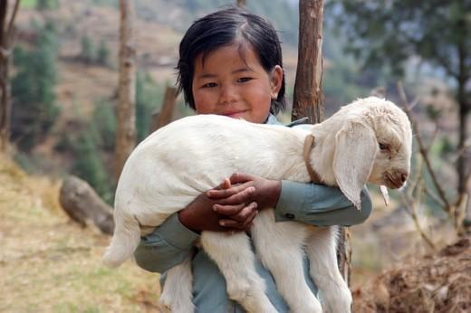 Dio e gli animali