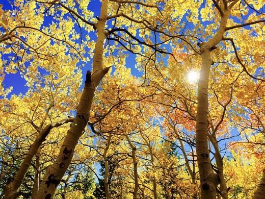 alberi parlanti
