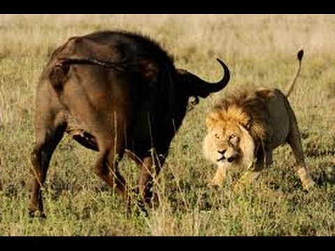 lotta animali